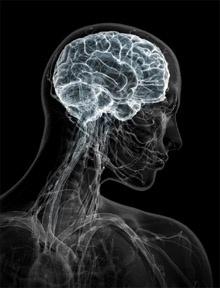 10 интересных фактов о работе памяти и мозга