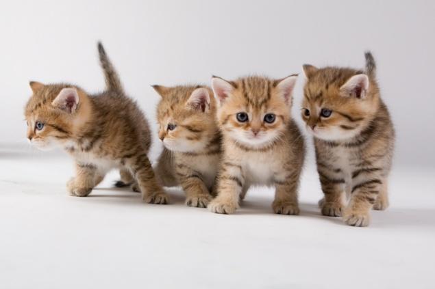 3 ошибки тех, кто завел котенка