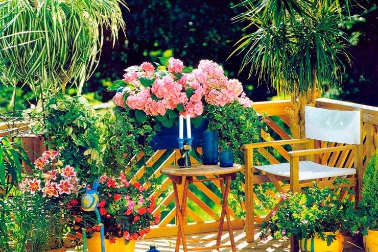 Для чего нужны комнатные растения?